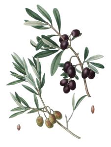 olivier0