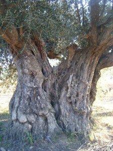olivierlugne