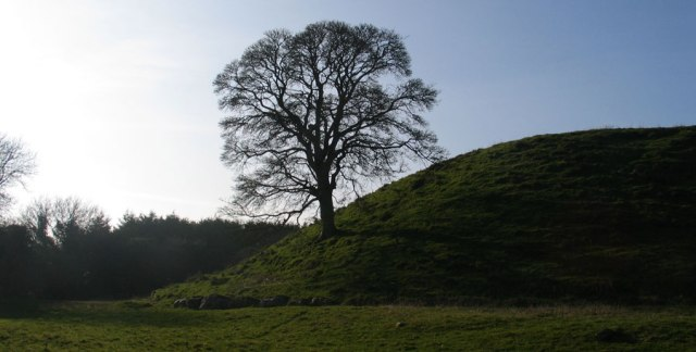 dowthtree
